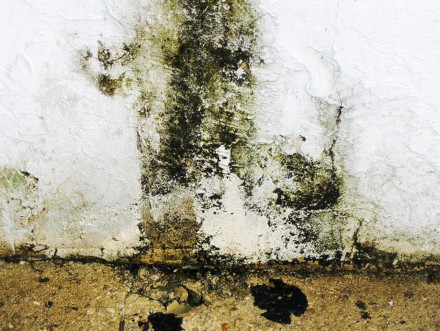 Mould Behind Walls