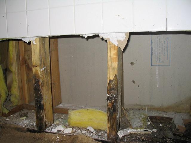 Hidden Mould Inside Walls