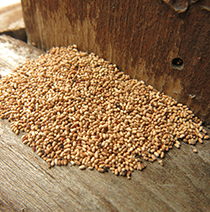 Termite-fecal-pellets