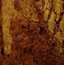 Termite-on-a-tree-stump