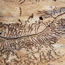 Termite-tracks